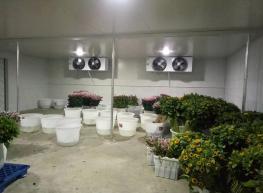 花卉保鲜库