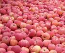 建造一个水果保鲜库多少钱?
