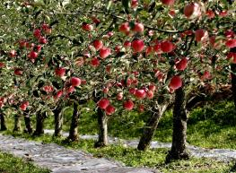 苹果保鲜库报价以及安装注意事项